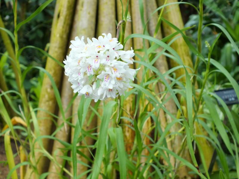 花の図鑑と写真集